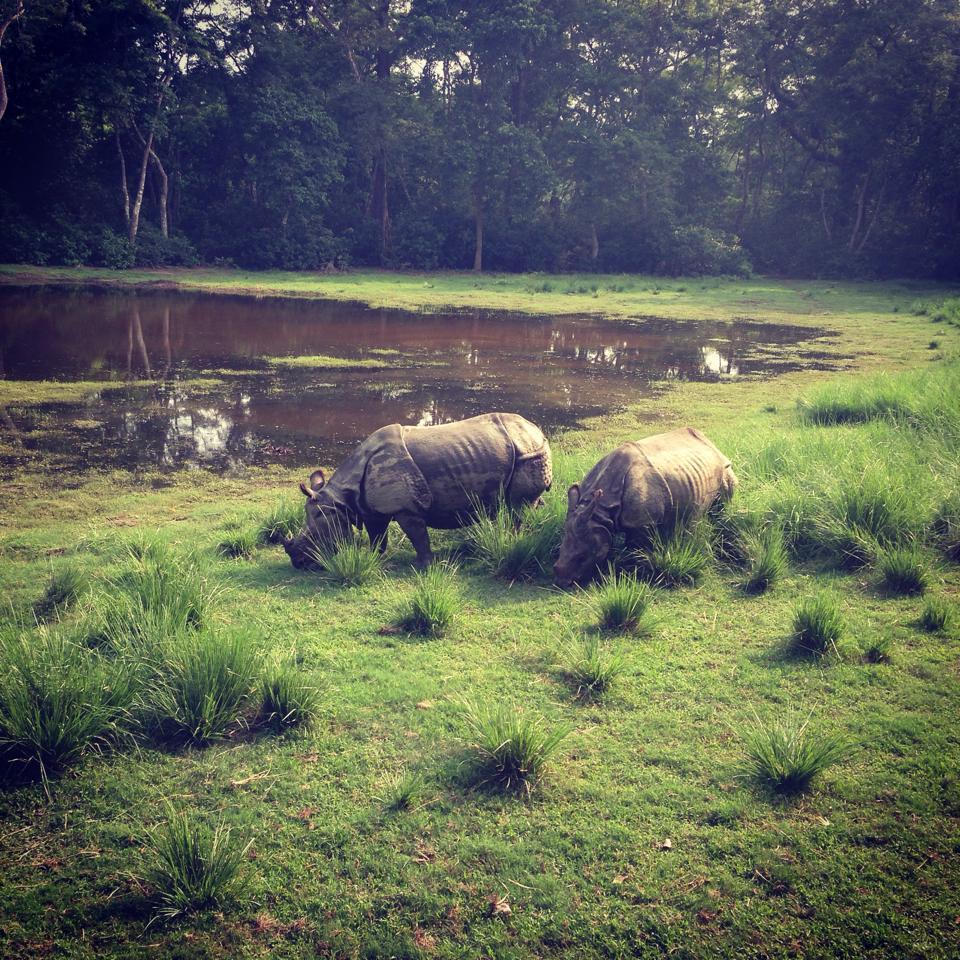 Rhinoceros in Nepal